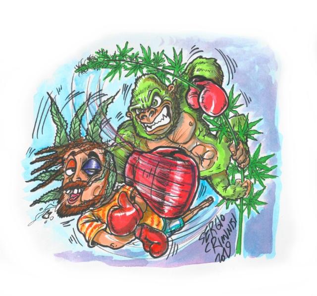 Cannabis seeds Quanta Kong