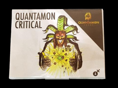 Seme di Cannabis - Quantamon Critical