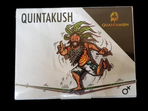 Seme di Cannabis - Quintakush
