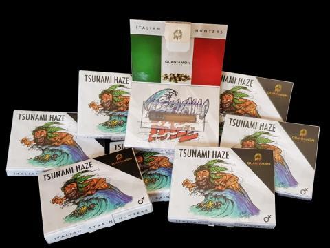 Seme di Cannabis - Tsunami Haze