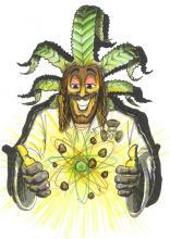 Seme di Cannabis - Quantamon Critical